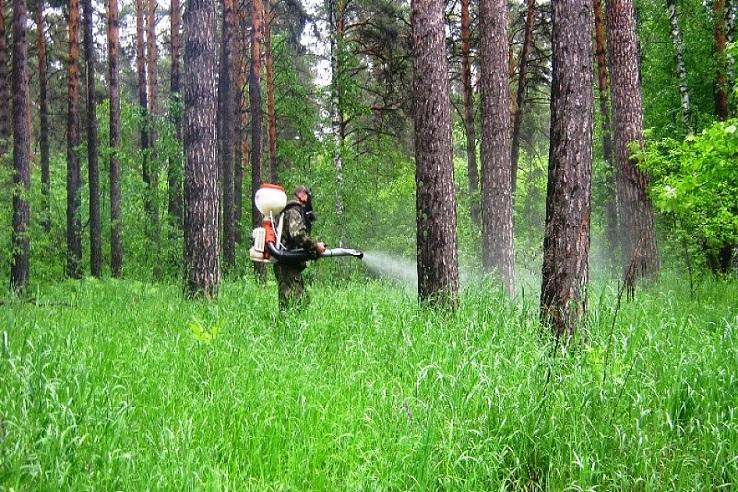 Обработка от клещей лесных массивов в Кирове